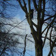 Tree-Felling-